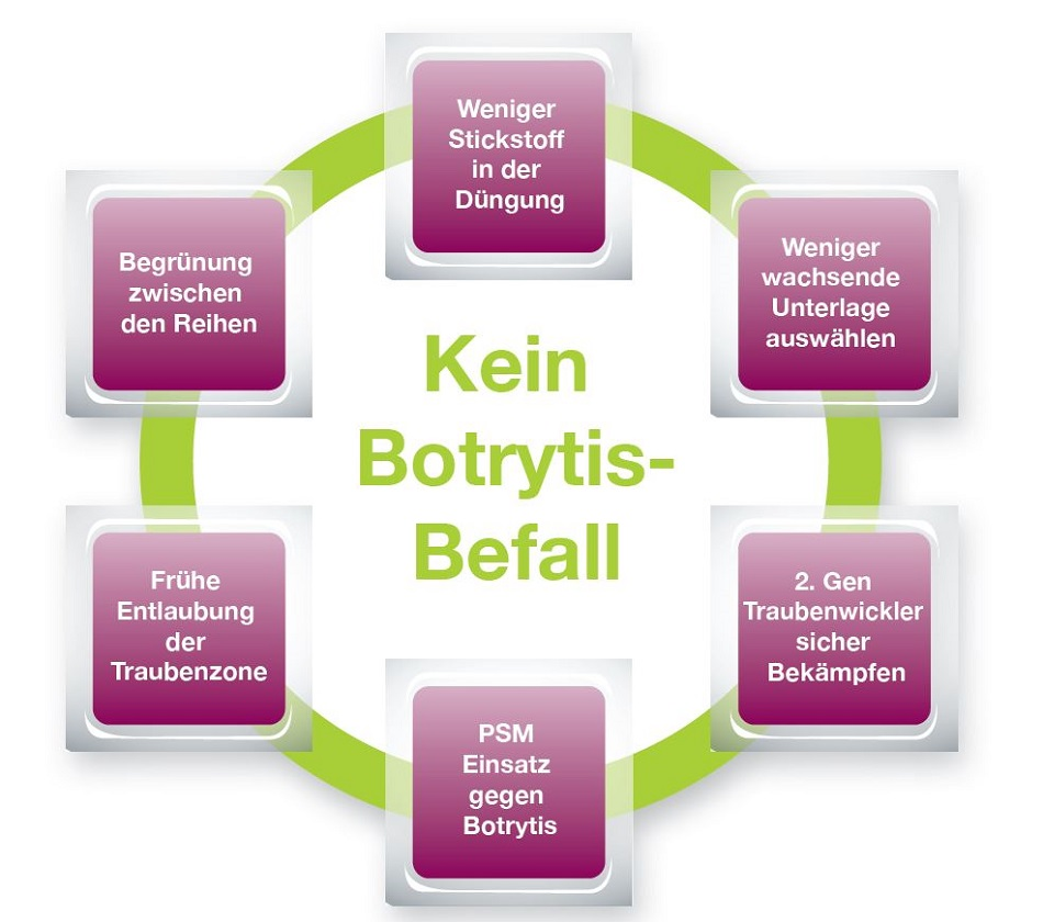 Kein Botrytis Befall